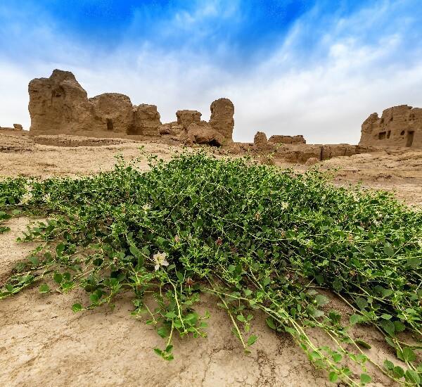 11-Day Tour from Xian to Kashgar