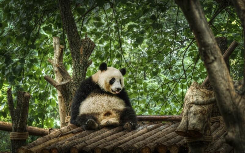 How to Plan a Chengdu Tour