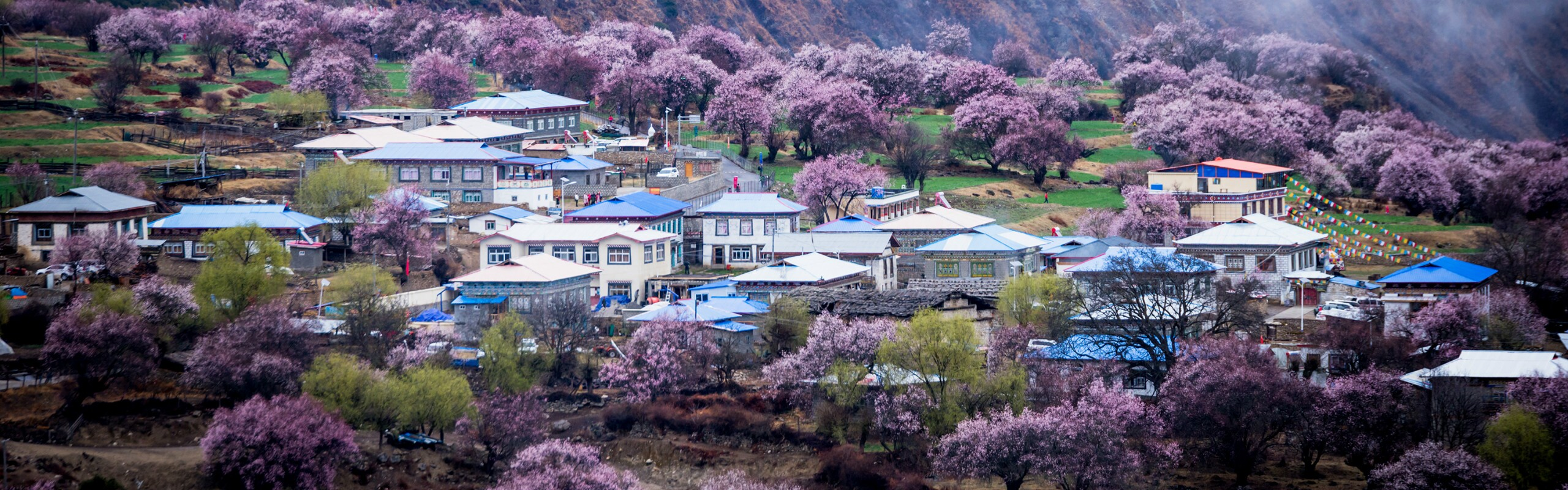8-Day Lhasa, Nyingchi, and Bome Tour