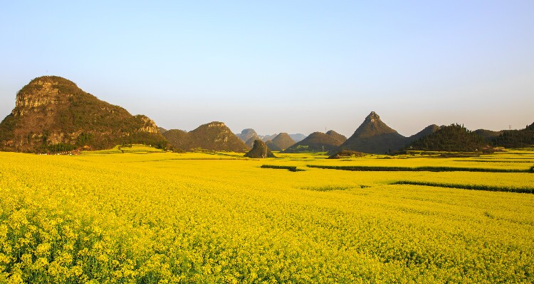 Luoping — The Golden Canola Fields of China