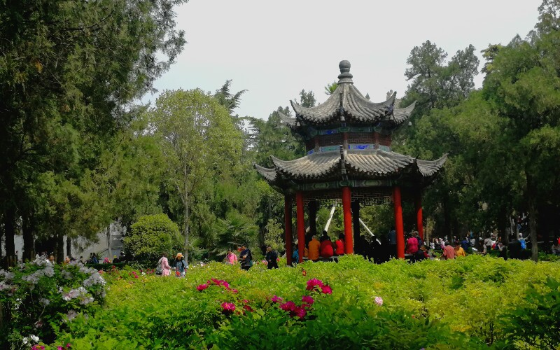 Luoyang National Peony Garden: See the Stunning Peonies