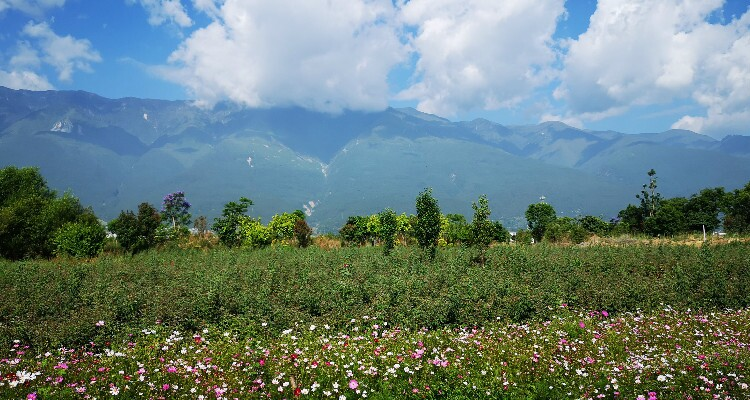 Cangshan Mountain with flowers
