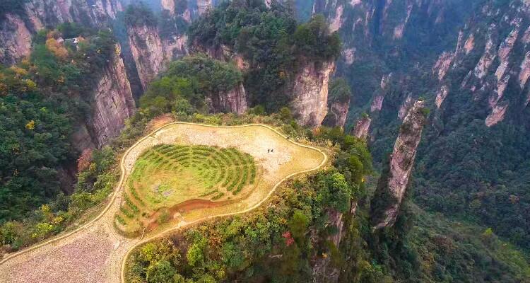 Sky Field Garden in Zhangjiajie