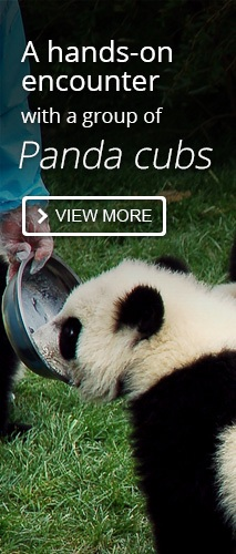 Panda Cub Keeper Program Tour