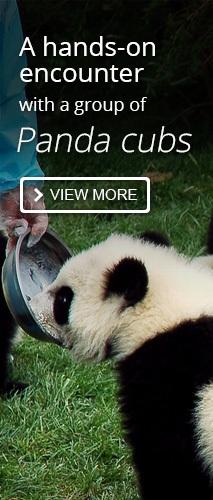 Panda Cub Keeper Program Tour