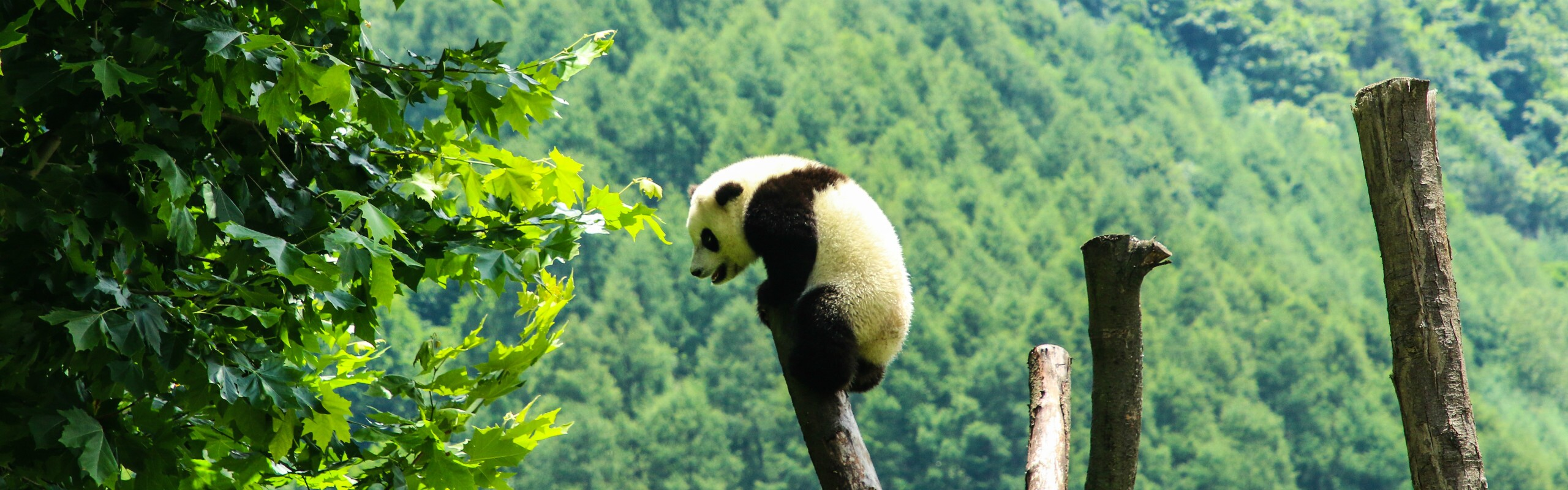 4 Days Wolong In-Depth Panda Tour