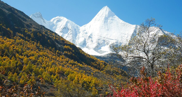 snow mountain and yellow forest