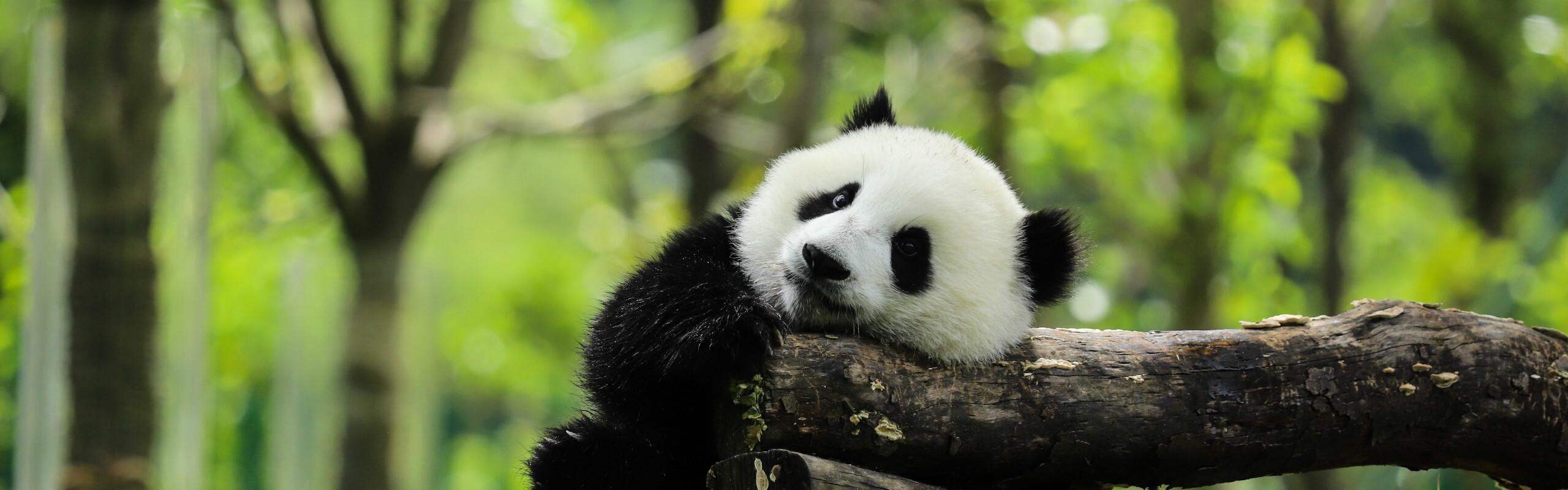 13-Day China Essence and Panda Tour
