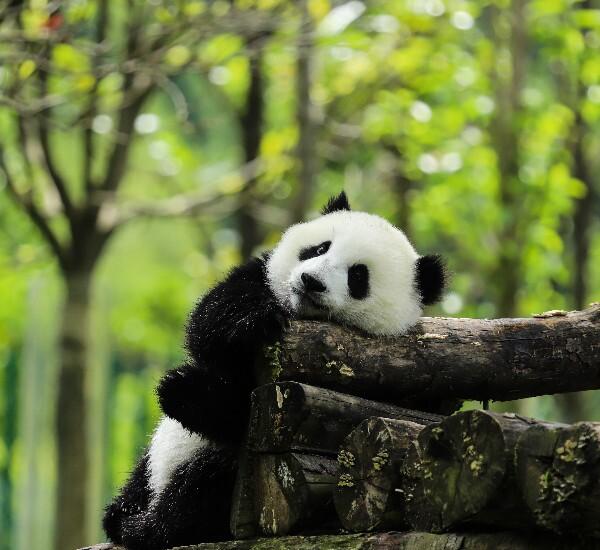 13-Day Private Tour: Beijing – Xi'an – Chengdu –Yangtze Cruise – Shanghai