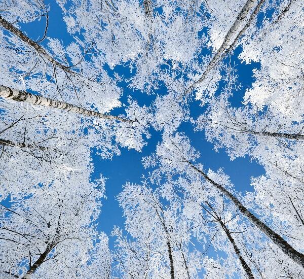 7-Day Harbin, China Snow Town, and Changbai Mountain Tour