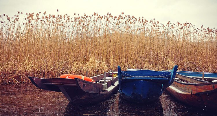 boats in the grasses