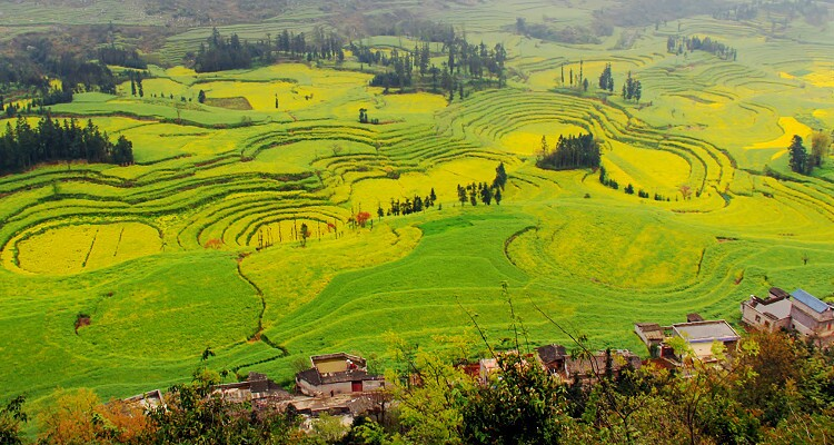 Luosi Fields