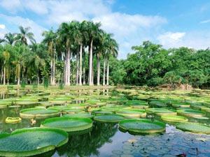 Xishuangbanna's tropical botanical garden