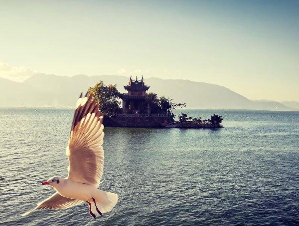 the birds on Erhai Lake
