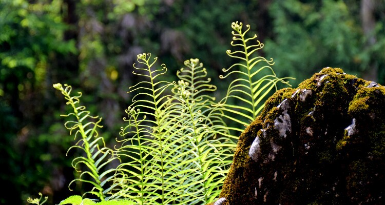 a plant in the rain forest