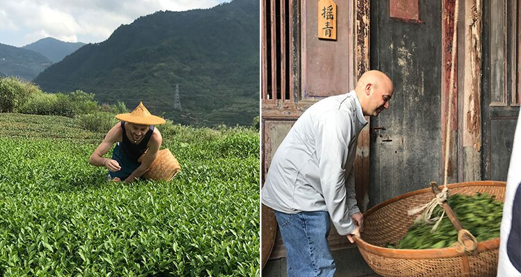 The making process of Oolong tea