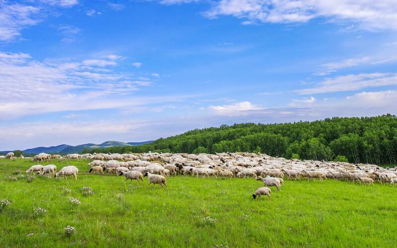 Hulunbuir Grassland