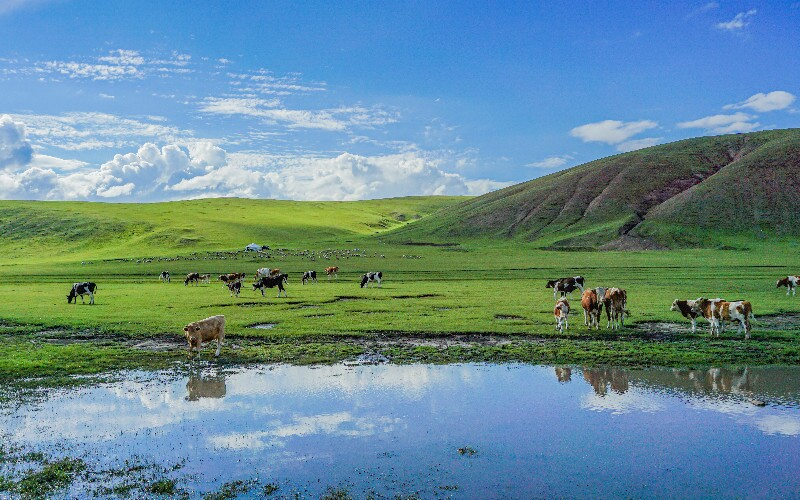 14 Top Things to Do in Inner Mongolia