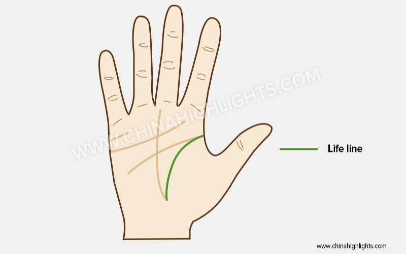 Life Line Palm Reading Guide