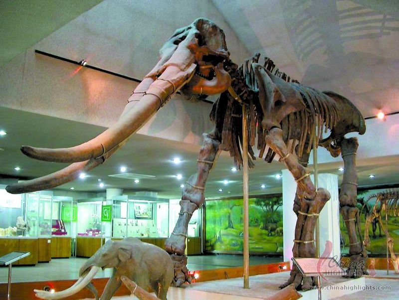 Paleozoological Museum Of China The Biggest