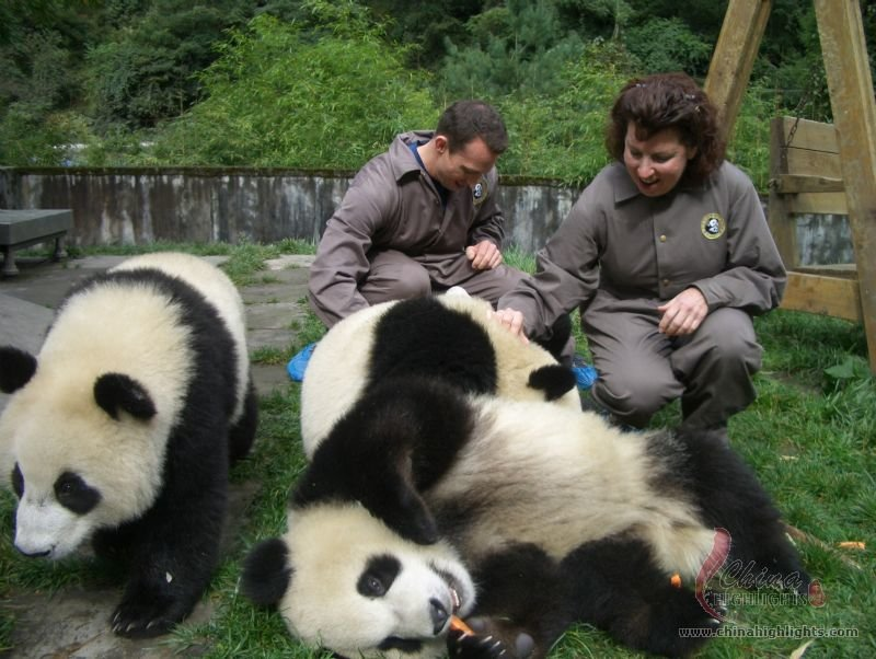 Bifengxia Giant Panda Base