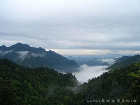 Nanling National Forest Park Shaoguan Of Guangzhou