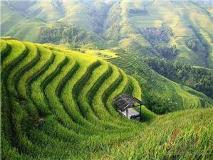 Longji Terraced Fields Hiking