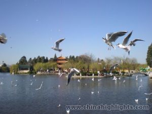 Kunming Winter