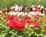 The National Peony Garden