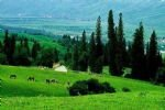 Mt Nan Pastures and Terai Camp