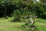 Tropical Botanical Garden at Menglun