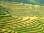 Guilin and longji Ancient Zhuang Ethnic Village Tour