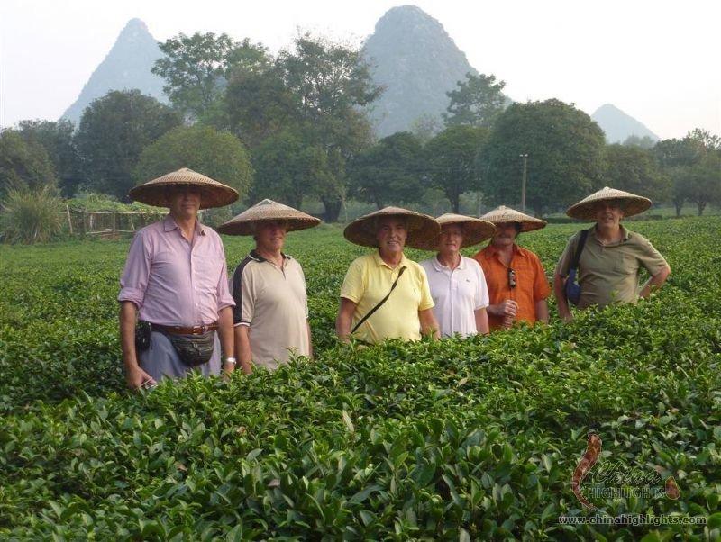 Guilin Tea Plantation