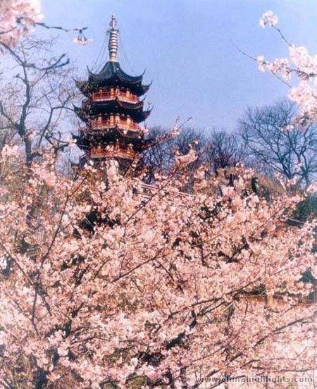 Suzhou Taihu Lake plum blossom
